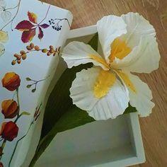 Flora Nordica (@_flora__nordica_) • Фотографије и видео записи на услузи Instagram Iris Flowers, Paper Flowers, Flora, White Iris, Lemon Yellow, Crepe Paper, Plants, Instagram, Plant