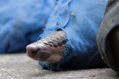 Facebook, Animal Rights, Animal Rescue, Wild Animals, Kawaii