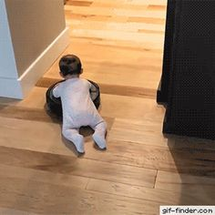 Roomba Rodeo - Find and Share funny animated gifs