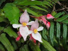 Orquídeas de la Sierra Maestra - Cuba