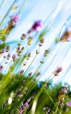 Find beauty everywhere — Bild über We Heart It...