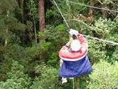 Tsitsikamma Canopy Tours: The Tsitsikamma Canopy Tour is a unique eco-wilderness adventure that takes place in the magnificent Tsitsikamma indigenous rainforest. Knysna, Wilderness, Canopy, Tours, Adventure, Unique, Holiday, Vacations, Holidays