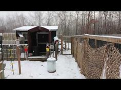 UP NORTH HOMESTEAD/ANGRY Broody CHICKENS/Prepare to ICE FISH?