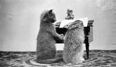 Kitten and Rabbit at Piano by State Historical Society of North Dakota on Flickr. Photo by Nancy Hendrickson, undated.