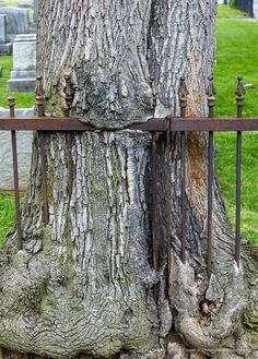 Tree and rusty fence | Flickr - Photo Sharing!