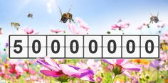 New blog post: Feed a Bee reaches 50 million flowers for the bees!