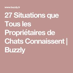 27 Situations que Tous les Propriétaires de Chats Connaissent | Buzzly