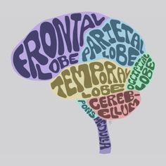 Brain T-Shirt typography Ap Psych, Psych Major, Radiologic Technology, Brain Models, Brain Anatomy, Brain Art, Play The Video, Vintage Medical, Doctor Gifts