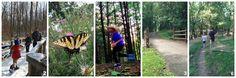 6 Family Friendly Hikes