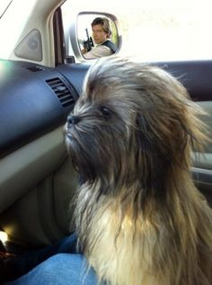 Chewy is that you???