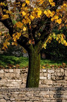 Bergamo | Iggi Falcon | Flickr
