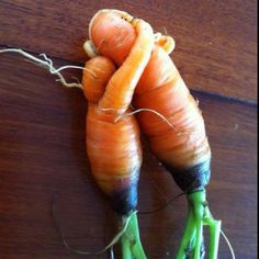 CUDDLING CARROTS: Cute, but deformed or forked carrots are still edible! They can be caused by compacted soil, over-watering, too much fertilizer (especially fresh manure), close spacing, root knot nematodes or disease. Correct spacing in a well-structured soil with plenty of compost is ideal for growing straight carrots. More vegetable tips @ http://themicrogardener.com/harvesting-vegetables-herbs/ | The Micro Gardener