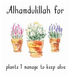 136: Alhamdulillah for plants I manage to keep alive  #AlhamdulillahForSeries