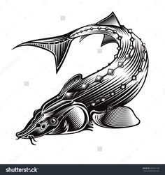Sturgeon fish bend silhouette in engraving style. Logo for fishing, caviar label, menu and other business