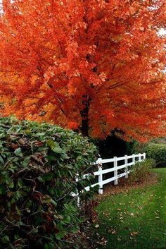 beautymothernature:  Such a beautiful Tre mother nature moments