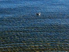 Newport Marina in Scarborough, QLD