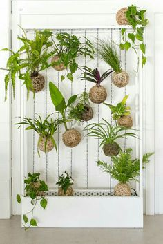 Fabulous DIY Vertical Garden Design Ideas Do you have a blank wall? do you want to decorate it? the best way to that is to create a vertical garden wall inside your home. A vertical garden wall, also called a… Continue Reading → Air Plants, Garden Plants, Indoor Plants, House Plants, Balcony Gardening, Porch Garden, Indoor Gardening, String Garden, Vertical Garden Design
