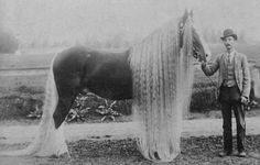 Rough light. seems to be early 1900s late 1800s. Cool horse with long hair.
