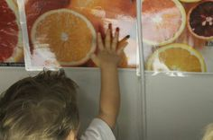Fruit exploration with the Light Board-also seeing it, eating it and painting the fruit....Little Wonders Blog
