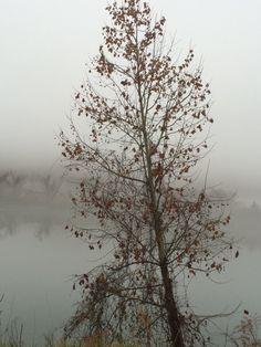 TN river in the winter fog