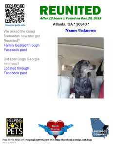 Helping Lost Pets | Dog - Poodle - Reunited