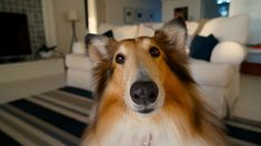 Tasks that professional pet sitters do at every visit.
