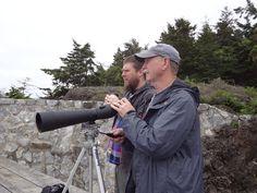 Mandatory NW tourist activity - whale watching
