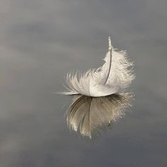 feather on the water