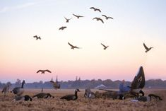 To find the best ways to limit out on Canada geese, we asked the country's top hunters to share their tips