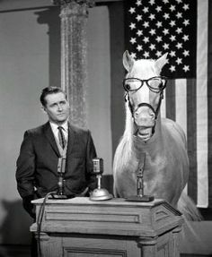 Mr Ed The Horse Tv Series Stock Pictures, Royalty-free Photos & Images 80 Tv Shows, Old Shows, Mister Ed, Alan Young, Strange Photos, Old Tv, Friends In Love, Stock Pictures, Palette