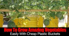 """If you are tight on space or struggled with growing vegetables, teenager Max and Grant Buster can show you how to grow amazing vegetables with a simple easy bucket system. Their goal... """"Two Buckets on a Mission to Reduce Malnutrition."""" Check out their how to and videos at the link... #spr #sum"""