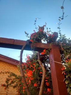 Nuestro gato Evo