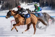 Free Image on Pixabay - White Turf, Horse Racing, Ice Free Pictures, Free Images, Courses Hippiques, Types Of Horses, Horse Racing, Camel, Animals, Russell, Commerce
