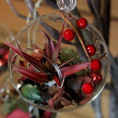 Bring the outside in this holiday season! Gorgeous holiday hanging globe terrarium includes an air plant and decor. #christmas #decor