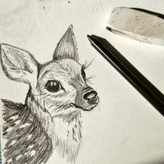 Fawn study in graphite, preparing for a woodland animals art series, coming soon in my Etsy