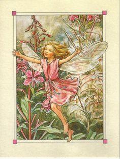 rose willow fairy 1/3
