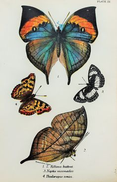 Beautiful Butterflies in Blue Orange & Brown by PaperPopinjay, $10.00