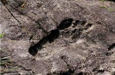 Impronte fossili di gigante scoperte da alcuni turisti nella provincia di…