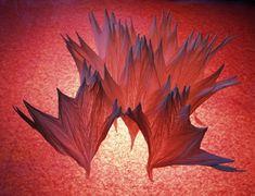 Vincent Floderer | origami