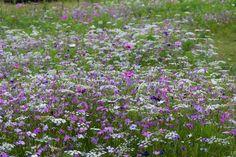 Praderas de plantas anuales y vivaces en Trentham Gardens   El Blog de La Tabla