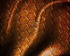 Google Image Result for http://us.123rf.com/400wm/400/400/argus456/argus4560806/argus456080602036/3207379-reptile-skin-texture-with-some-spots-on-it.jpg
