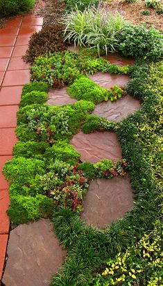 Garden Landscaping Sedums are decorative between paving stones, great fillers in containers and create colorful groundcovers in landscaping. Garden Paths, Garden Landscaping, Outdoor Gardens, Beautiful Gardens, Garden Design, Rock Garden, Plants, Ground Cover, Garden Inspiration