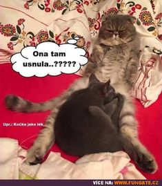 Freddy S, Haha, Funny Memes, Cute, Anime, Pictures, Ha Ha, Kawaii, Cartoon Movies