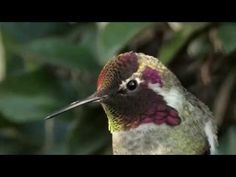 This Hummingbird Is Gorgeous. But When He Moved His Head I Couldn't Believe My Eyes - GoingViralPosts
