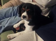 Cooper, my parents new pup