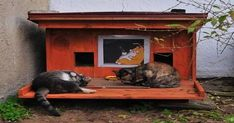 GALLERY: They Built Shelters For Homeless Cats To Survive The Winter And They Absolutely LOVE THEM!  #CoolCatTreeHouse