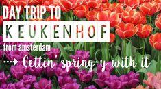 Day trip to Keukenhof flower tulip gardens outside Amsterdam   Lisse, Netherlands   Dutch heritage   Windmills