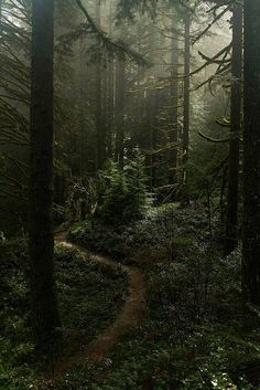 Misty forest at Silverton falls area, Oregon!