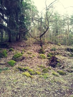 Forest in Stockholm Sweden. This is where I go to breathe..