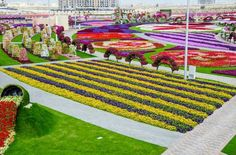 Jardin en Dubai.